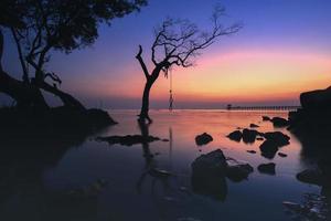 silhouette d'un arbre au coucher du soleil photo