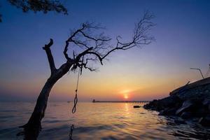 silhouette d'arbre au coucher du soleil photo