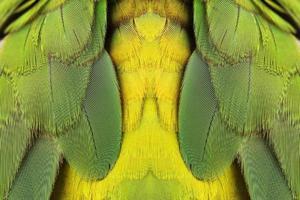 plumes d'oiseaux verts colorés photo