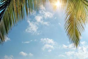 Cocotiers de palmiers tropicaux sur un ciel bleu avec sun flare photo