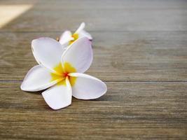 Fleurs de frangipanier sur plancher de bois photo