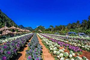 Chiang Mai, Thaïlande, 2021 - jardin de fleurs coupées photo