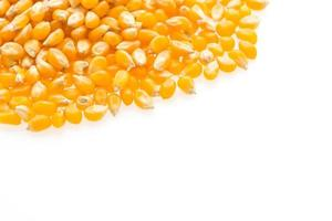 graine d'épi de maïs photo