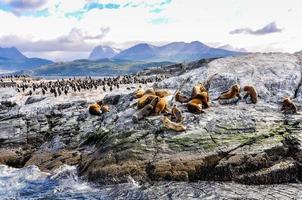 Un grand groupe de phoques et de lions de mer, canal Beagle, Ushuaia, Argentine