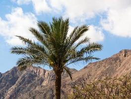 palmiers et montagnes photo