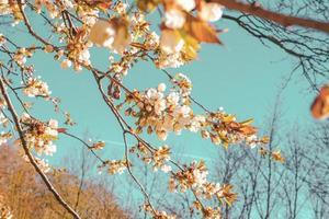 feuilles d'automne sur de fines branches dans la nature du danemark photo