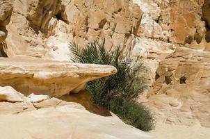 arbuste entre les rochers photo