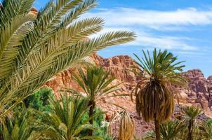 oasis dans un désert