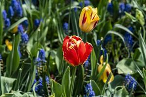 fleurs rouges, jaunes et bleues