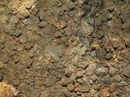 patch de sol pour le fond ou la texture photo