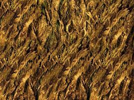 gros plan de l'écorce des arbres pour le fond ou la texture
