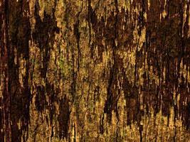 gros plan de l'écorce des arbres pour le fond ou la texture photo