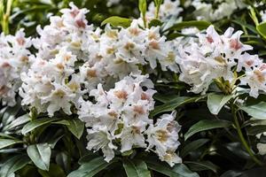 fleurs blanches et jaunes sur un buisson
