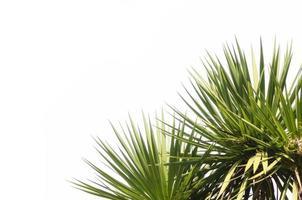 plantes tropicales vertes sur fond blanc photo