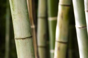 gros plan, de, écorce de bambou photo
