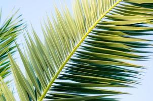 feuilles de palmier dans le ciel photo