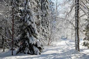 un sentier à travers un paysage forestier hivernal photo