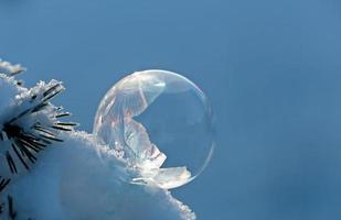 bulle de neige gelée sur une branche photo