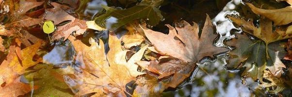Tas de feuilles d'érable d'automne tombées humides dans l'eau et les rochers photo