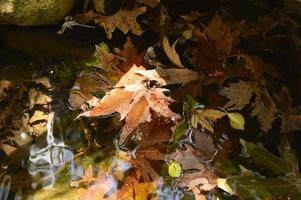 Feuilles d'érable d'automne tombées humides dans l'eau et les rochers photo