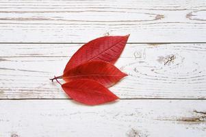 Plusieurs feuilles mortes d'automne rouge sur un fond de planches de bois clair photo