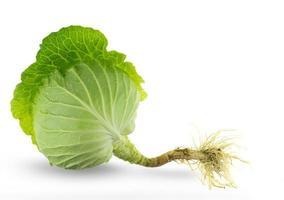Chou frais vert avec racine isolé sur fond blanc photo