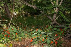 fougères et plantes près d'un ruisseau photo