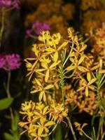 fleur d'orchidée dans la nature photo