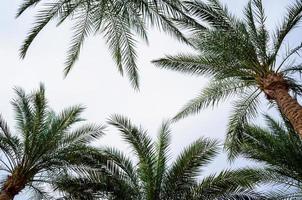 palmiers dans le ciel photo