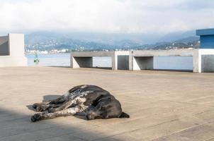 chien couché sur le sol près de l & # 39; eau photo