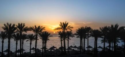 silhouettes de palmiers et de parapluies au coucher du soleil photo