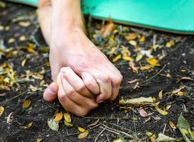 se tenant la main contre les feuilles photo