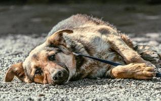 chien couché sur gravier