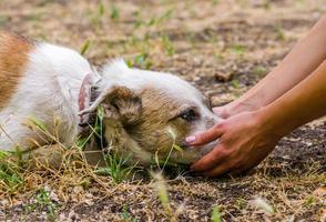 chien dans les mains
