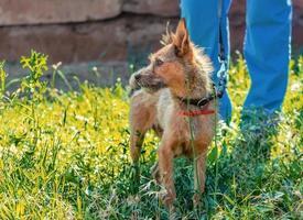 chien et propriétaire dans l'herbe photo