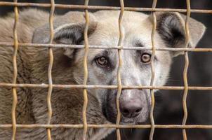 chien dans une cage métallique