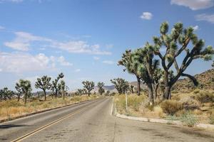 Joshua arbres bordant la route photo