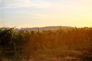 coucher de soleil dans un vignoble californien