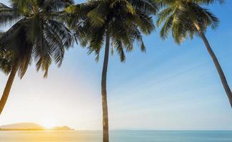 coucher de soleil sur la mer avec trois cocotiers photo