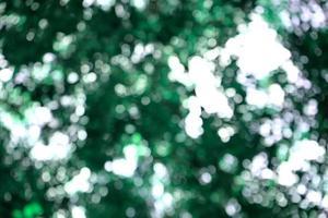 bokeh d'arbres frais verts luxuriants photo