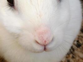 gros plan, de, a, lapin blanc, figure photo