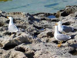 mouettes à la plage au bord de la mer photo