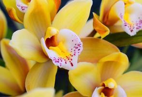 gros plan d'une fleur jaune photo