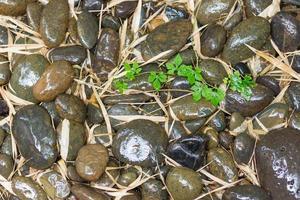 pierres de rivière humides et feuilles de bambou photo
