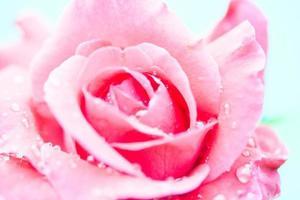 Macro gros plan d'une rose avec des gouttes d'eau photo