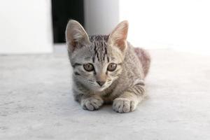 Gros plan d'un mignon chaton assis à l'extérieur avec un style de couleur pastel doux photo