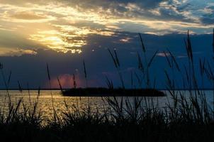 silhouettes de plantes au coucher du soleil photo