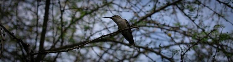 Colibri perché sur un arbre photo