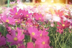 Mise au point sélective sur la foule de fleurs de marguerite colorées dans le domaine