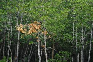 bondé d'arbres dans la forêt de mangrove photo
